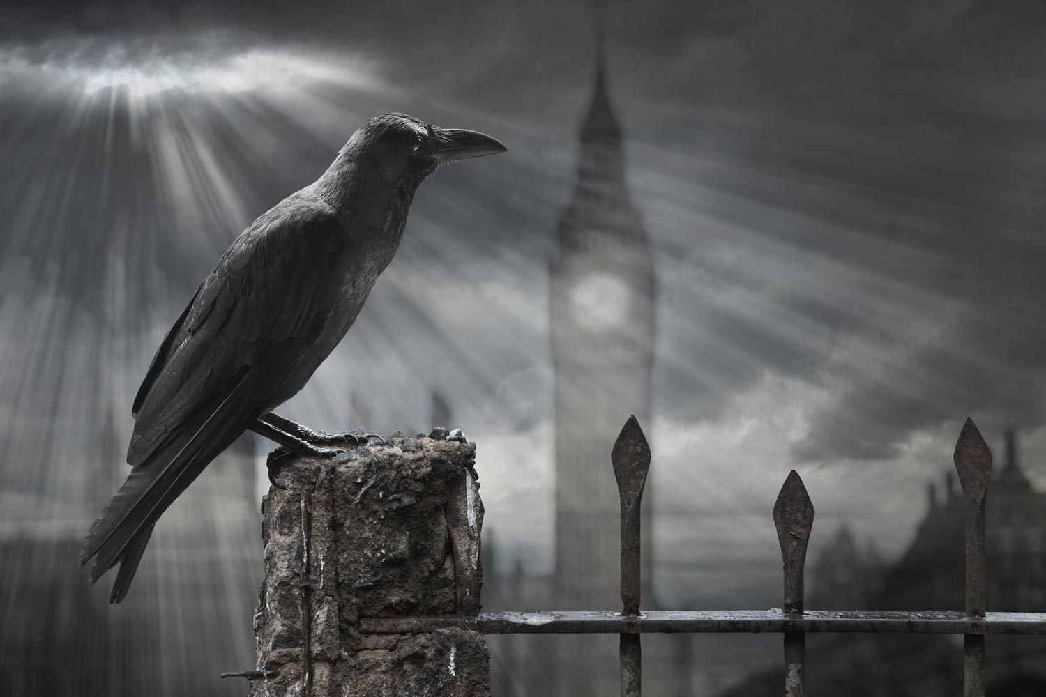 Crow in London with stormy