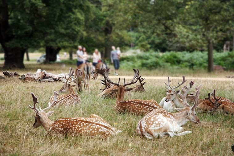 Deer London