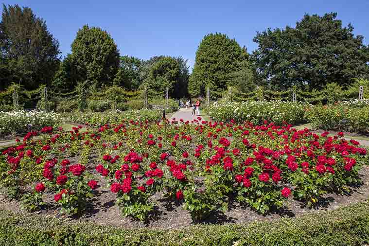 Queen Mary's Rose Gardens London